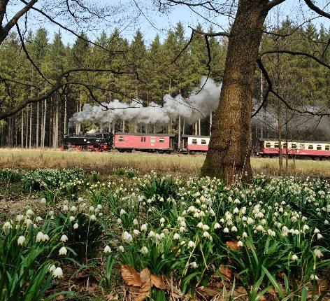 Quedlinburg & Selketal